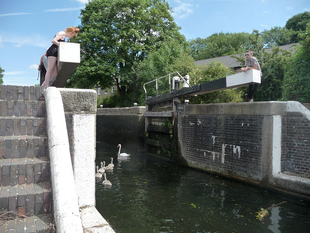 Another shot of the Swan & her six cygnets entering the lock