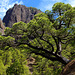 Wanderung durch die Cumbrecita (PiP)