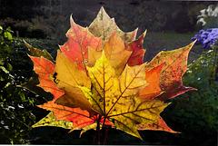 Herbstfarben (PiP = Animation)