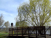 Bridge and a willow