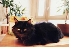 Pacha, 13 ans