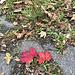 Autumn colours begin