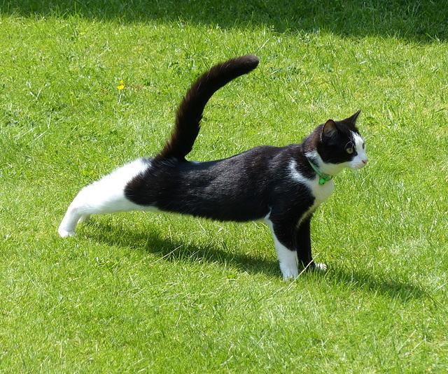 Feline Yoga