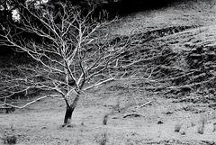 Te Rakau Me Te Poka I Te Rangi/ The Tree And The Hole In The Sky