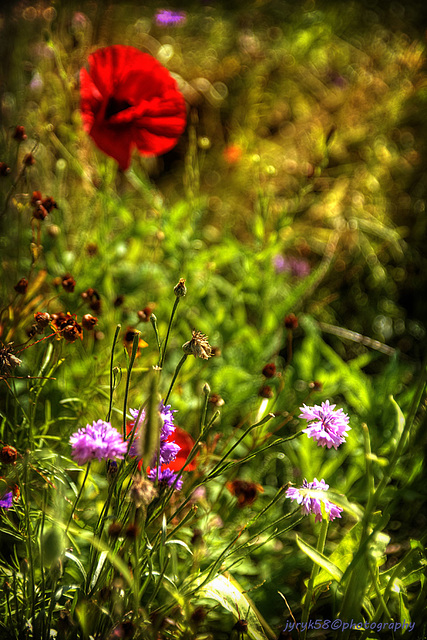 Wild Flowers 2