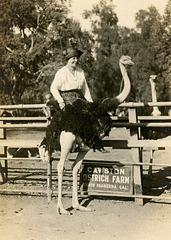 Woman at the Cawston Ostrich Farm, South Pasadena, Calif.