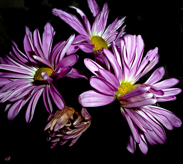 Aldi Flowers #4