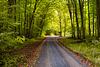 Es wird Herbst im Wald - It's autumn in the forest