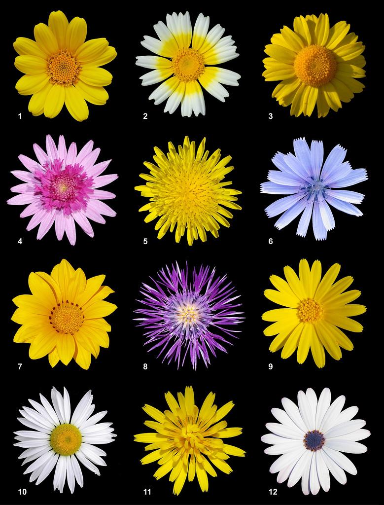 Fleurs cueillies pour vous