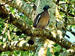 à l'ombre de mon arbre ☯¨*•.ღ✻✿✻ღ.•*¨☯