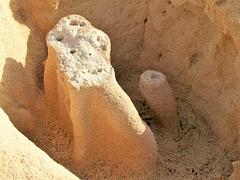 Versteinerte Spuren von fossilen Mangrovenwurzeln