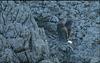 2008 S 1355 Sup3 10 ipernity 17.IX.2008. - The grey heron (Ardea cinerea) Siva čaplja 5250 IpernityBirds