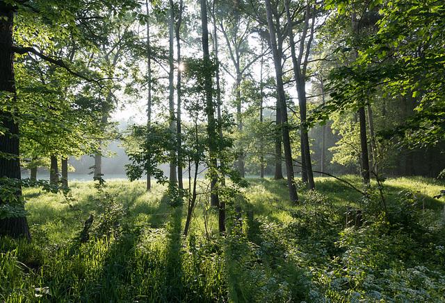 Réserve naturelle de Am Enterborn, Allemagne