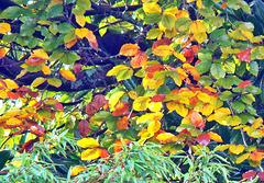 Kaleidoscope of Leaves.