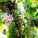 Orchids. ©UdoSm