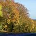 Staffordshire autumn colours