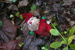 Festive shit I find in the woods.