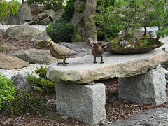 unsterbliche Gartenvögel