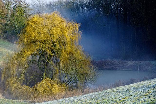 Winternebel am Weiher - Winter Fog on the Pond