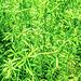 Grüne Wildnis