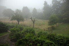 Foggy Fence Friday  -  HFF!