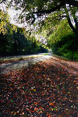 Autumn on the canal (2 of 2).