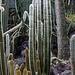 20140801 4625VRAw [D~E] Kaktus, Gruga-Park, Essen