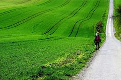 Ein Ausflug ins Grüne - A trip into the green