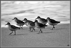 la patrouille de france sur une plage normande .......