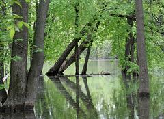 rivière du chêne, St-Eustache