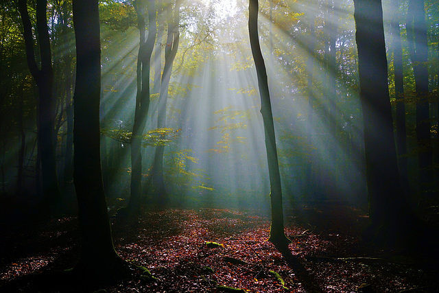 Es werde Licht! - Let there be light!
