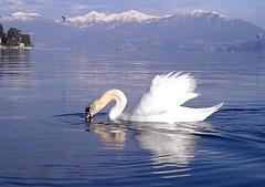 Verbania - Inverno al lago