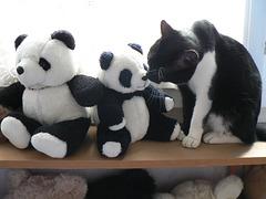 Kenzo et les pandas