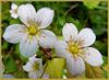 Miniblüten