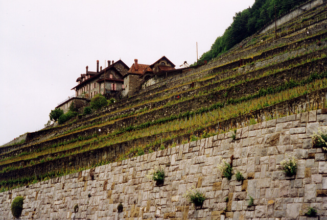 swiss vinyards by lake geneva