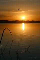 Good Morning Sunshine... 3