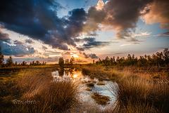 Sonnenuntergang im Hahnenmoor