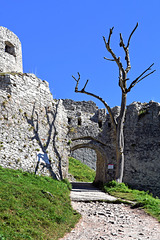 Ehrenberg Castle (2)