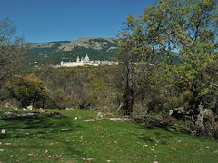 The Palace Monastery of San Lorenzo de El Escorial, seen from the Herrería Woods. Mount Abantos gives a suitable backdrop.
