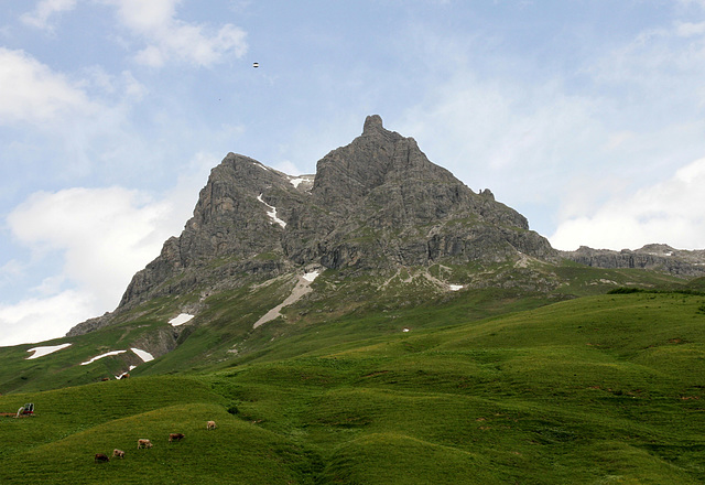 Bergspitze des Widderstein-Schröcken