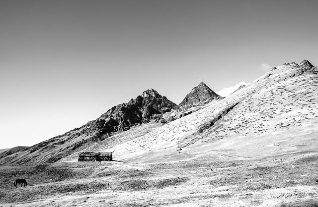 Wilderness, a hut and a horse