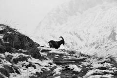 Wintereinbruch in den Alpen  S/W