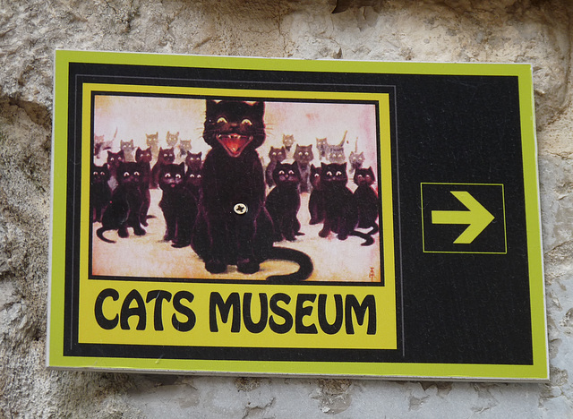 Kotor- This Way to the Cats Museum