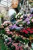 Hortensias variés