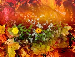 last flowers ⭐