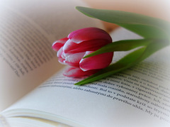 Book and Tulip