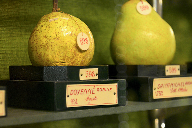 Turin 2017 – Fruit Museum – Wax pears