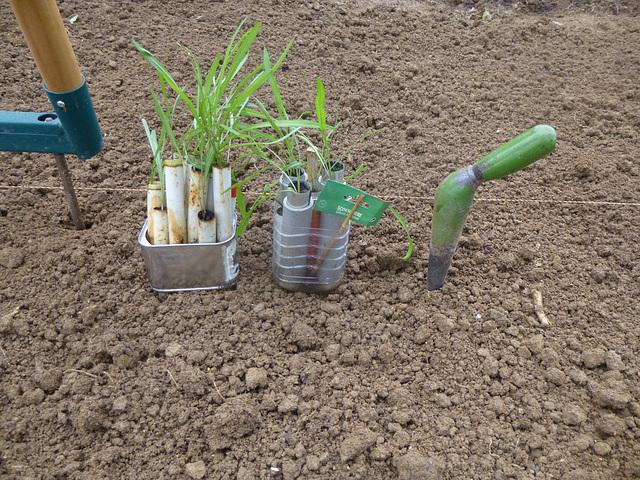 Plantation de scorsonères / Plantado de skorzoneroj