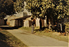 Vendange Samonac 1979 (Château Haut-Castenet, Côtes-de-Bourg, Bordeaux); picking figs outside our sleeping quarters.