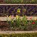 Blühendes Barock - - Augenweide